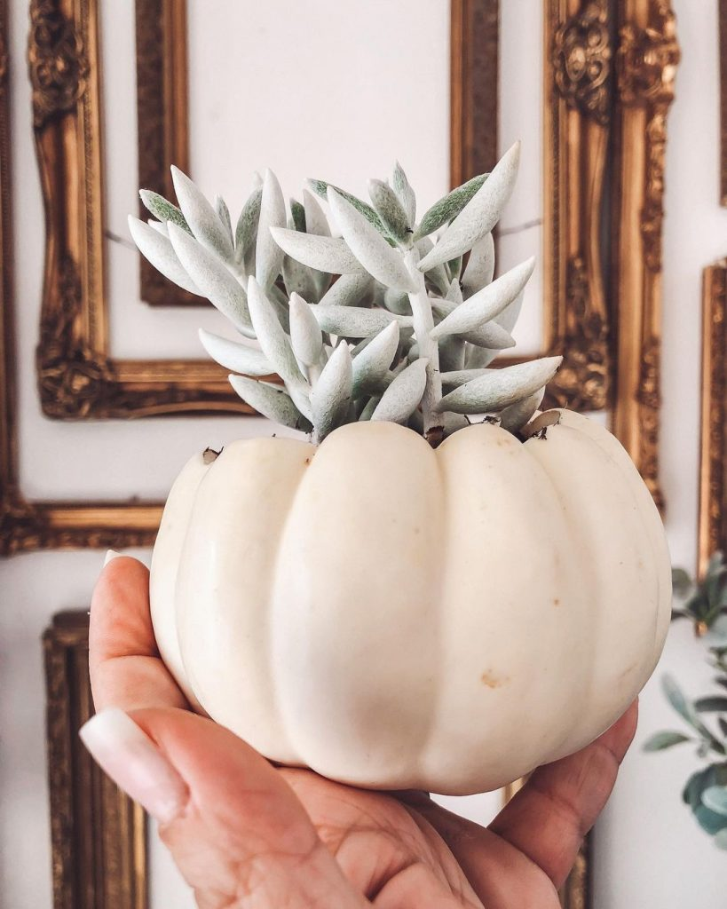 100 Adorable DIY Fall Home Decoration Ideas On A Budget 34