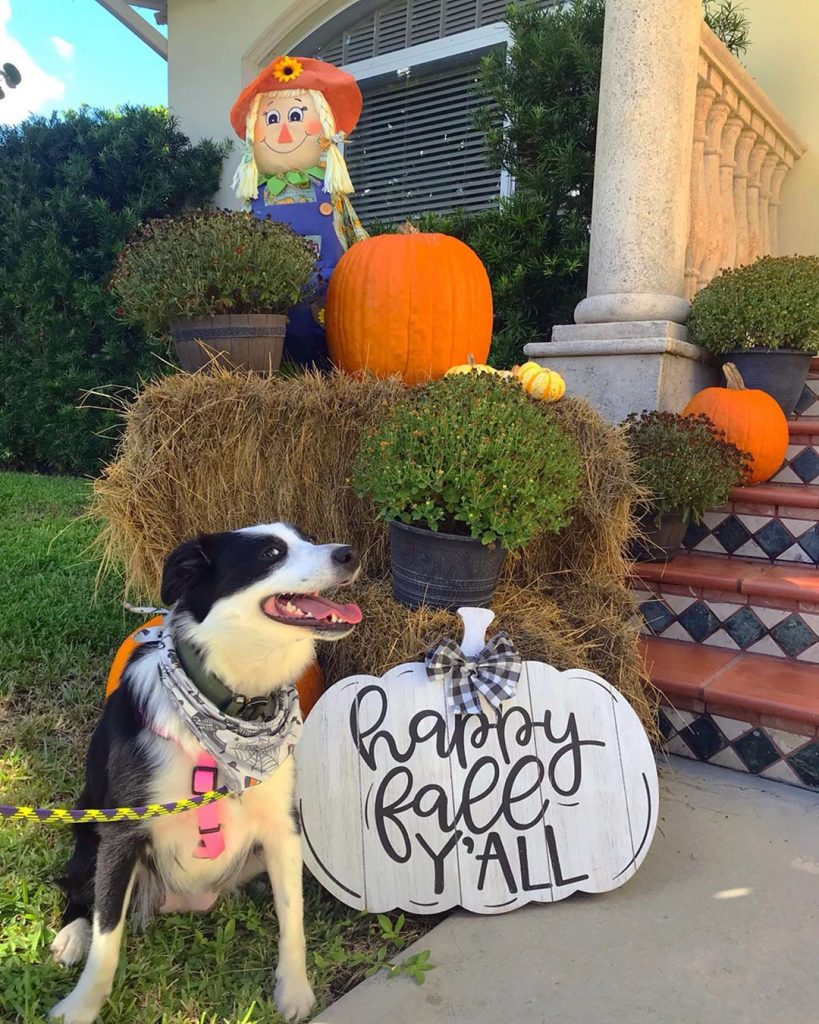 80+ Creative Fall Decoration Ideas With Pumpkins You Will Totally Love (34)
