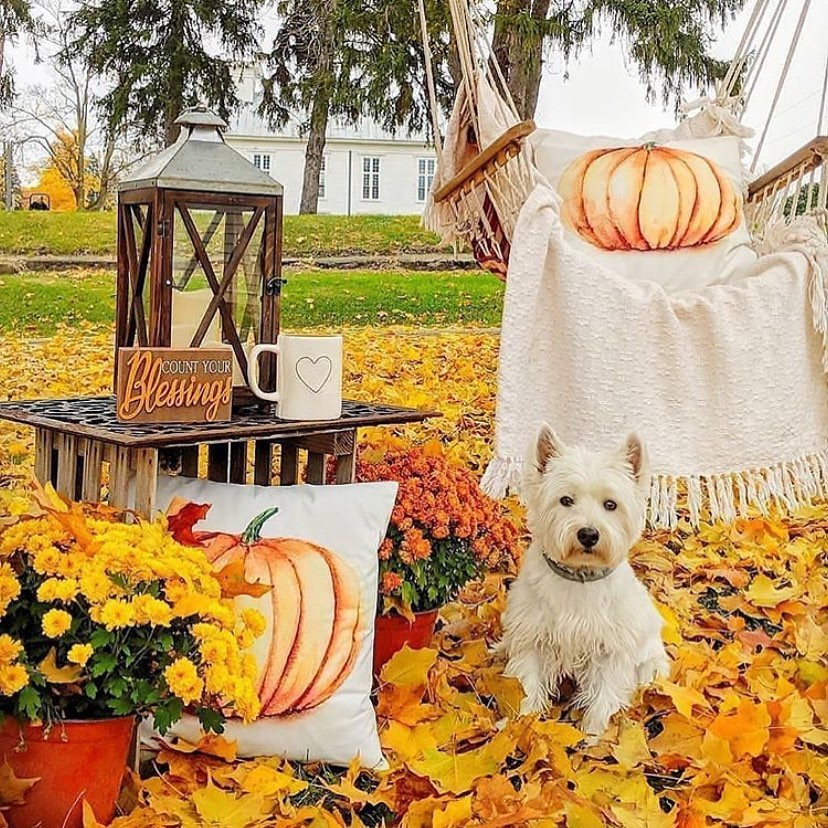 80+ Creative Fall Decoration Ideas With Pumpkins You Will Totally Love (35)