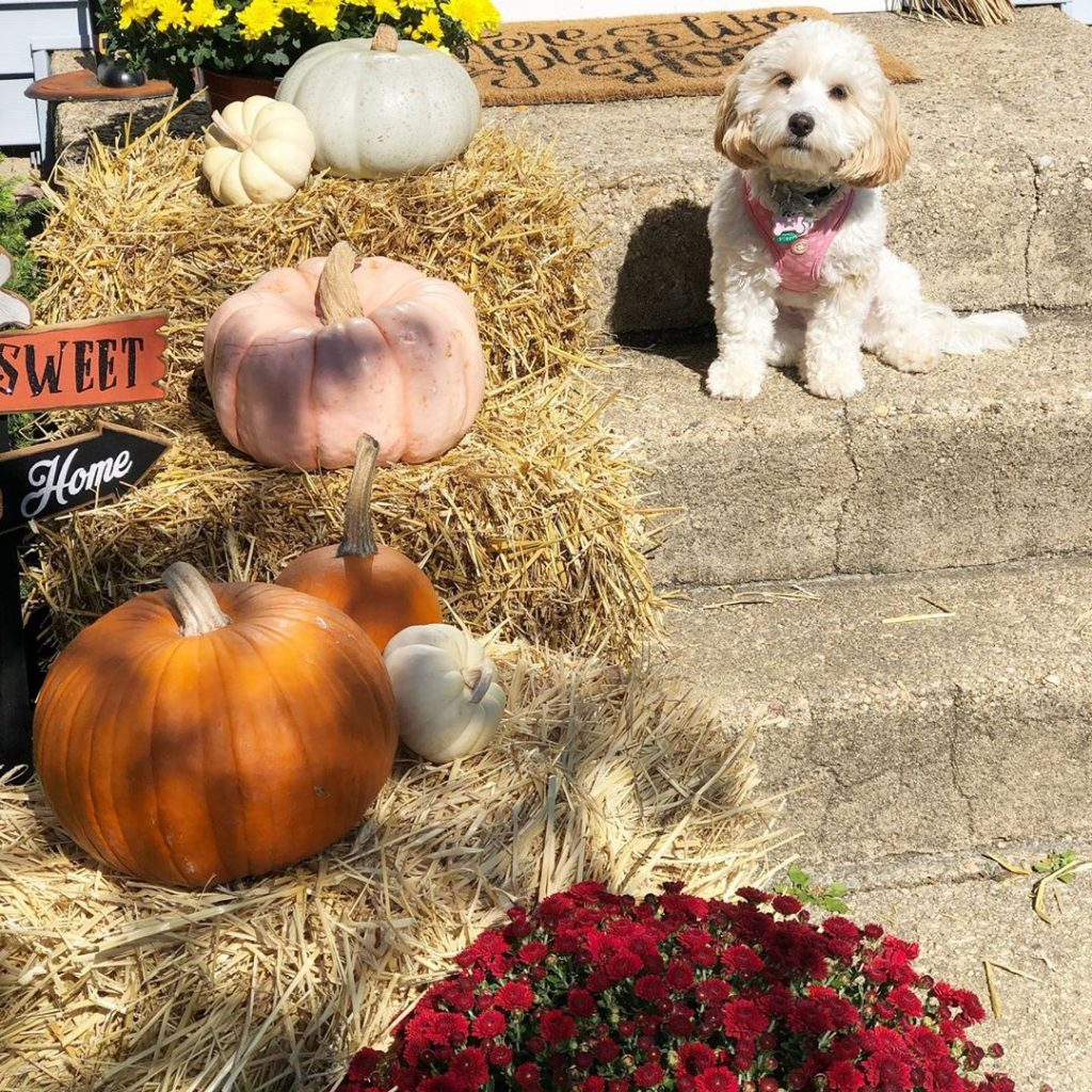 80+ Creative Fall Decoration Ideas With Pumpkins You Will Totally Love (46)
