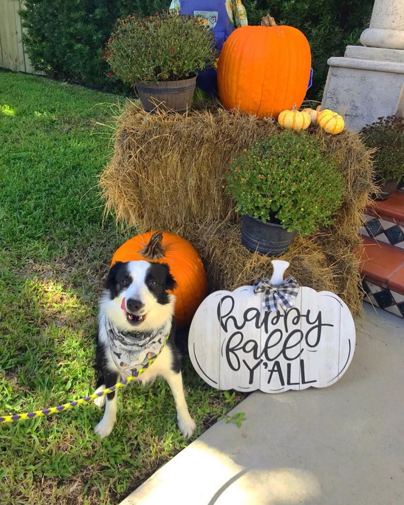 80+ Creative Fall Decoration Ideas With Pumpkins You Will Totally Love (50)