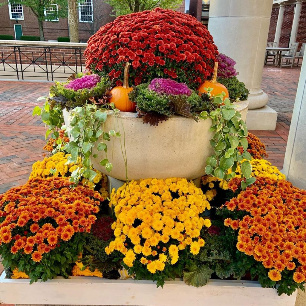 80+ Creative Fall Decoration Ideas With Pumpkins You Will Totally Love (52)