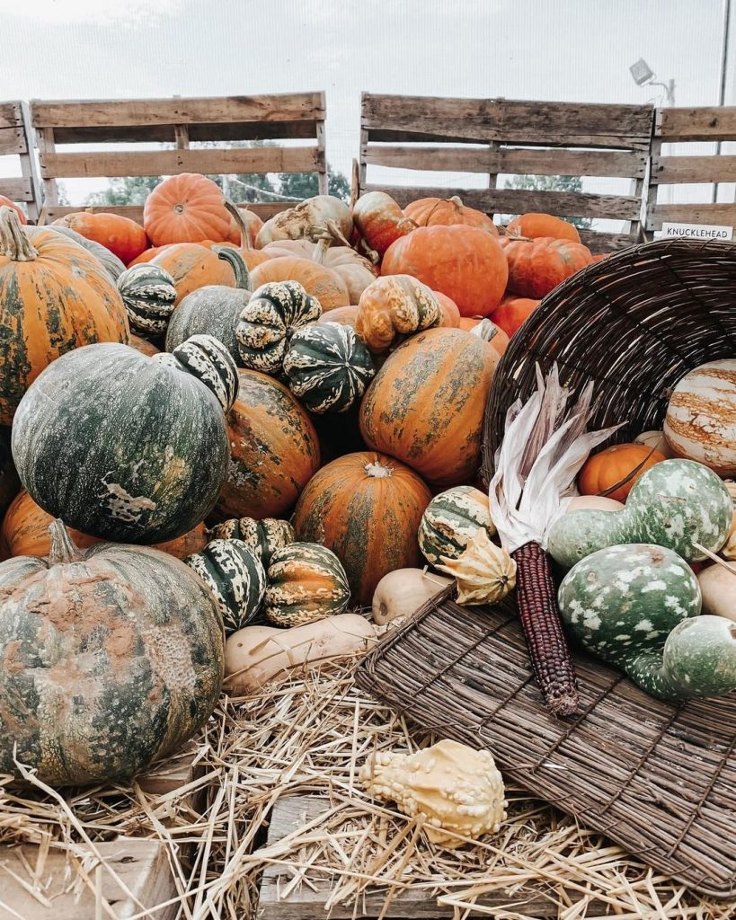100 Thanksgiving Decoration Ideas Stylize Your Home With Fall Accents 75