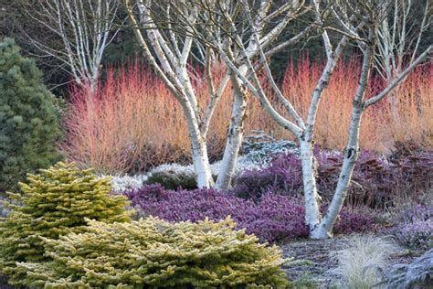 Marvelous Winter Garden Design For Small Backyard Landscaping Ideas 27