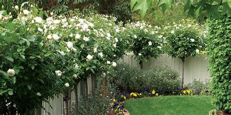Marvelous Winter Garden Design For Small Backyard Landscaping Ideas 30